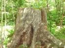 Мужичок-лесовичок