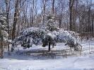 Ель в снегу